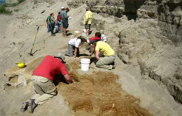 Uncovering of a myriad of mostly Proboscidean (mammoth or mastadon) footprints (foreground) near American Falls Reservoir, Idaho. The  effort was a cross-agency accomplishment, including employees from the Bureau  of Reclamation, Bureau of Land Management, U.S. Forest Service, and National  Park Service, as well as staff and students of Idaho State University and the  Idaho Museum of Natural History in Pocatello, Idaho.