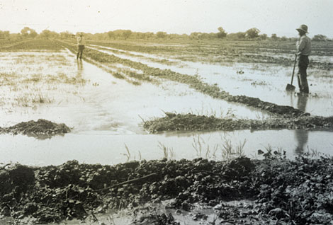 A reliable water supply allowed for flood irrigation of some fields. (Reclamation photograph)