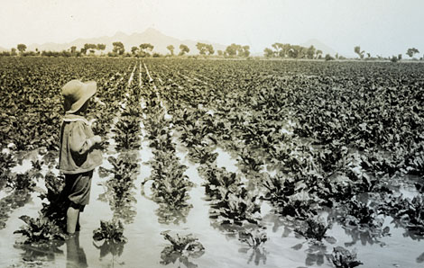 A young child stands ankle-deep in an irrigated field of what may be broad-leaf lettuce. (Reclamation photograph)