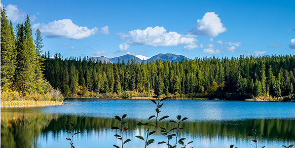 A pond near the Rocky Mountains of Montana that is reflecting the trees around it.