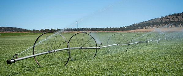 photo of field irrigation