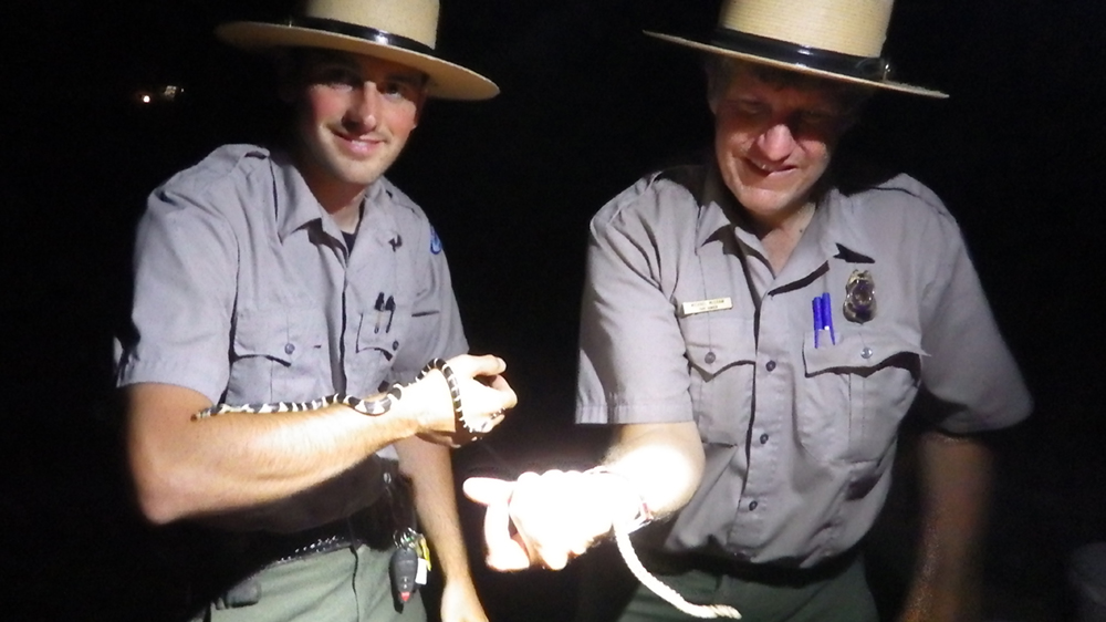 Rangers holding snakes they encountered at Nocturnal Happenings