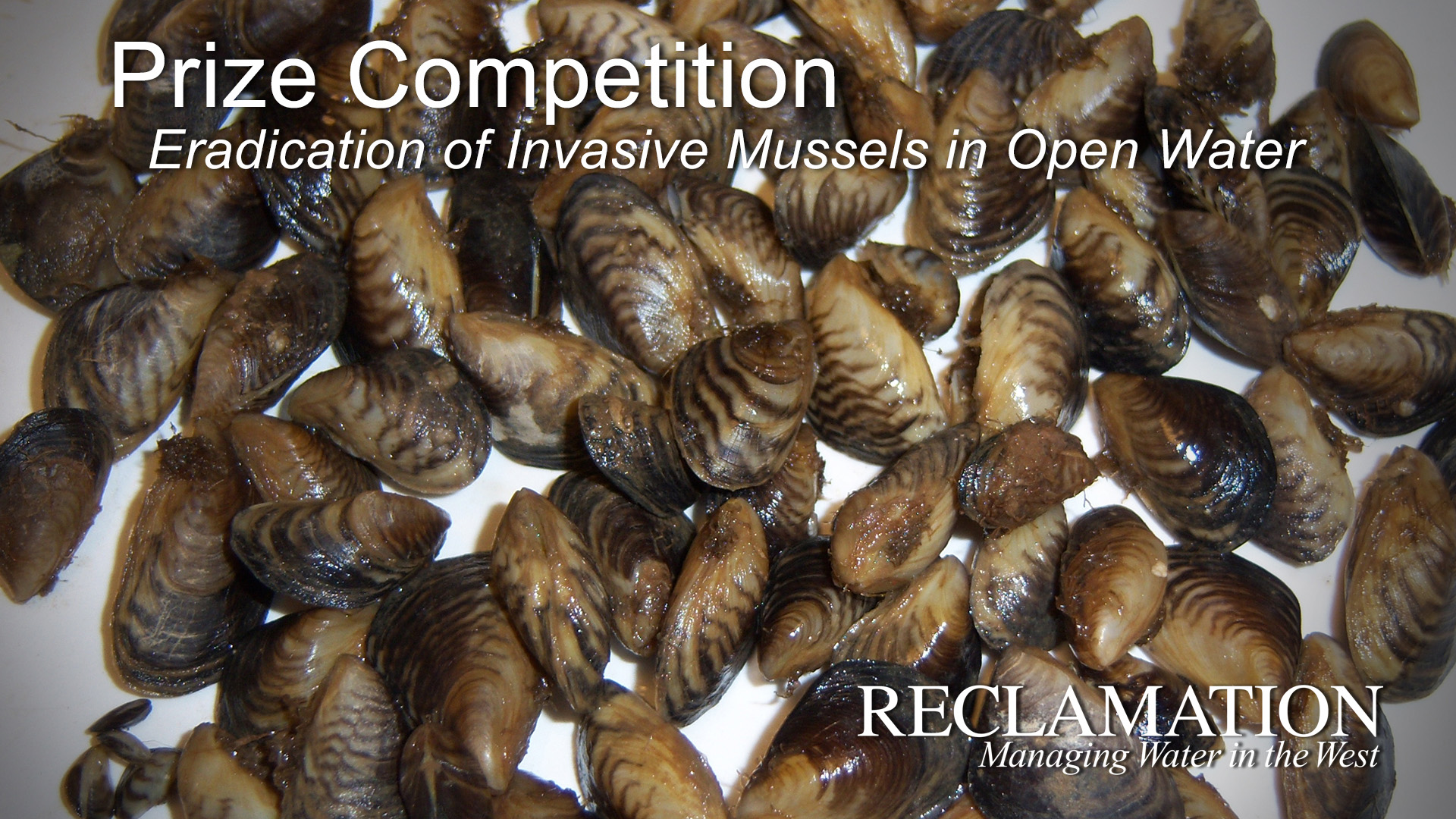 Image of invasive mussels with text: Prize Competition, Eradicaton of Invasive Mussels, Reclamation Managing Water in the West.