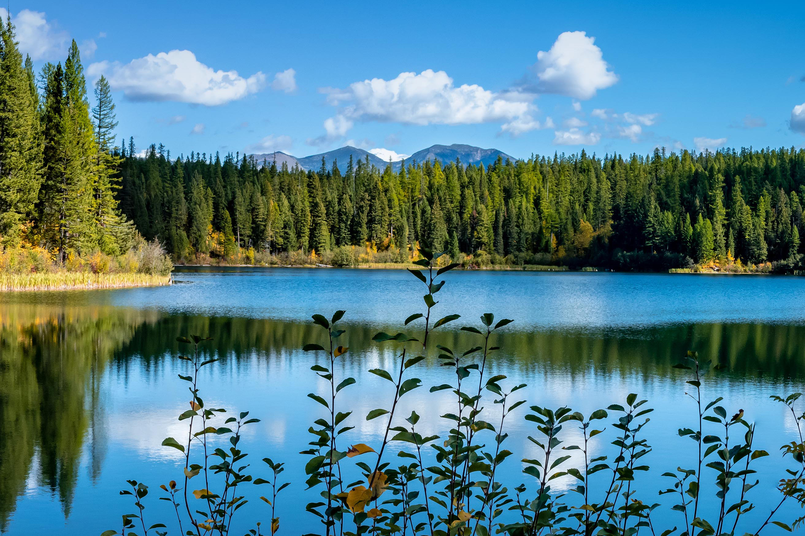 A pond near in the Rocky Mountains of Montana that is reflecting the trees around it.